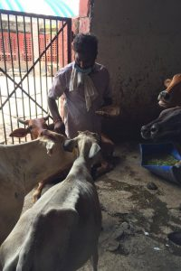 Sanjay Gandhi Animal Care centre5